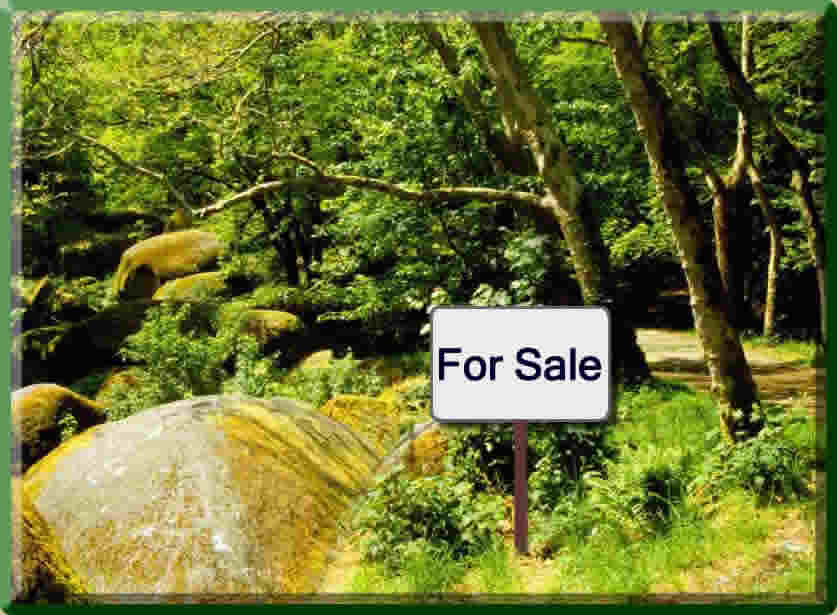 Timber land for sale
